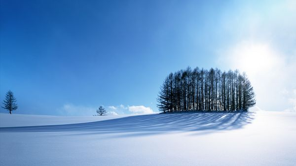 click to free download the wallpaper--Pics of Snowy Scene - No Footsteps, a Pure World Under the Blue Sky, Everything is Fine