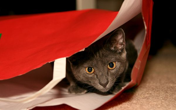 click to free download the wallpaper--Picture of Funny Cat, Hiding Itself in Paper Bag, Frighten the Master?