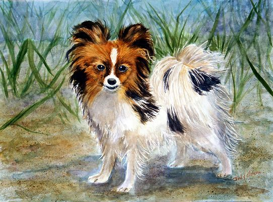 Pictures of Papillon Dogs