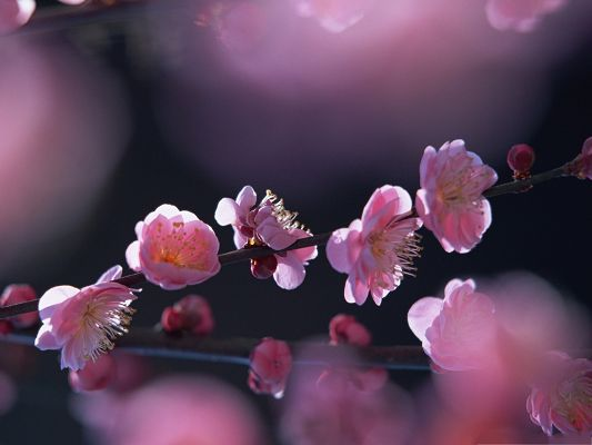 click to free download the wallpaper--Pink Blossom Flowers, Small Blooming Flowers, Great Spring Landscape