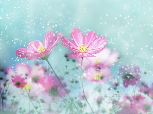 click to free download the wallpaper--Pink Flower Image, Blooming Flower on Blue Snowy Background