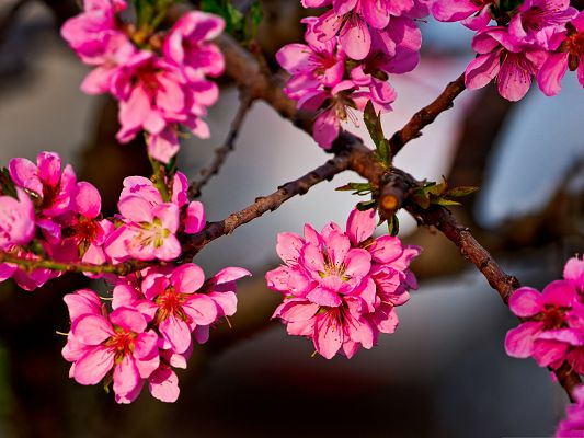 click to free download the wallpaper--Pink Flower Images, Beautiful Flowers Bouquet, Thin Brown Branch