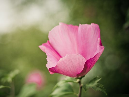 click to free download the wallpaper--Pink Flower Photography, Pink Blooming Flower on Green Background