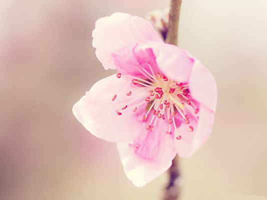 click to free download the wallpaper--Pink Flower Photography, Pretty Little Flower in Bloom, Thin Brown Branch