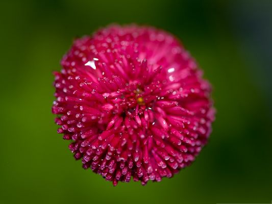 click to free download the wallpaper--Pink Flower Photos, Blooming Pink Flower Put Against Green Background, Fresh Waterdrops on It