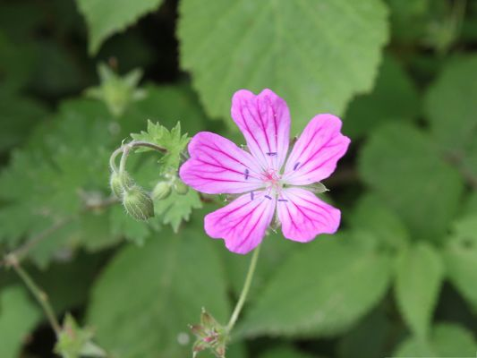 Pink Flower Pictures, Tiny Flower in Bloom, Green Leaves Around