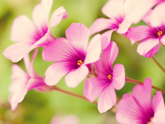 click to free download the wallpaper--Pink Flower Pictures, Tiny Flower in Bloom, Put Against Green Background