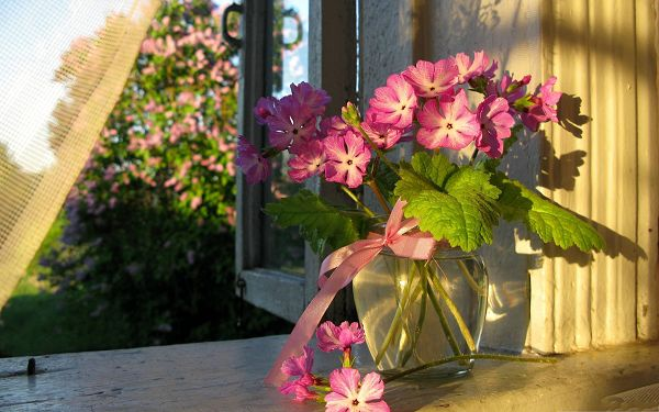 click to free download the wallpaper--Pink Flowers Image, Pretty Flowers in Bloom, Indoor Scenery