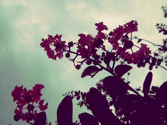 click to free download the wallpaper--Pink Flowers Photo, Beautiful Flowers in Bloom, Under the Blue Sky