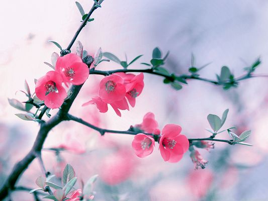 Pink Flowers Photography, Blooming Flowers and Green Leaves, Romantic and Great Scenery