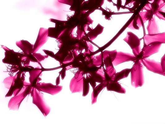 click to free download the wallpaper--Pink Flowers Photography, Blooming Flowers on Thin Branch, Romantic Scene