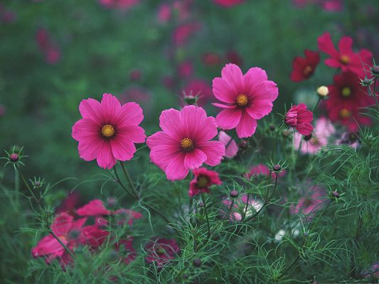 click to free download the wallpaper--Pink Flowers Picture, Blooming Little Flowers in Nature, Amazing Scene
