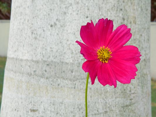 click to free download the wallpaper--Pink Flowers Picture, Small Flower Blooming, Put Against White Paper Background