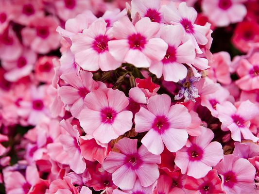 click to free download the wallpaper--Pink Garden Flowers, Little Flowers in Bloom, They Are Happy in Smile