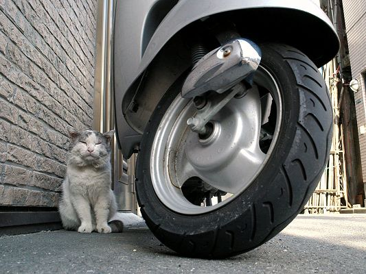 click to free download the wallpaper--Poor Cat Image, Homeless Kitten Curled Up Behind Motor Wheel, Falling Asleep