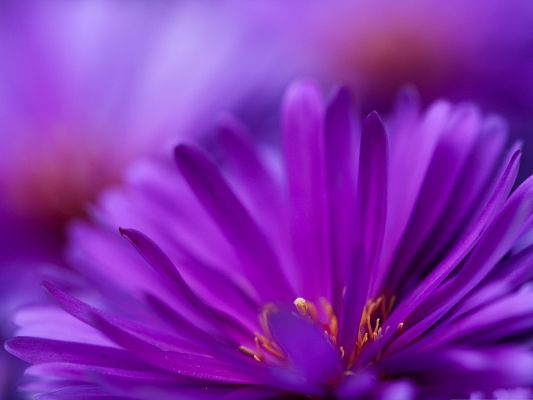 click to free download the wallpaper--Purple Flower Petals, Like Long Stretched Arms, Amazing in Look