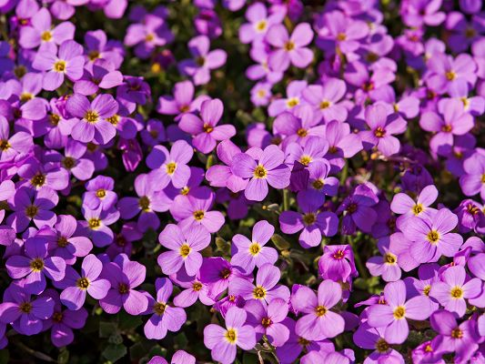click to free download the wallpaper--Purple Flowers Field, Blooming Tiny Flowers, Incredible Scenery