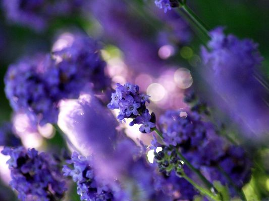 click to free download the wallpaper--Purple Flowers Image, Beautiful Flower in Bloom, Bubbles in the Middle