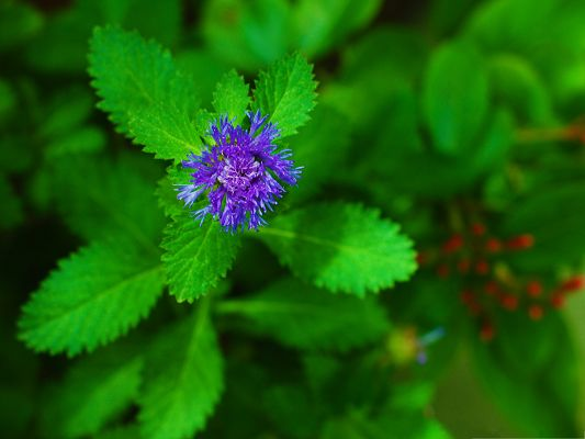 click to free download the wallpaper--Purple Flowers Image, Blooming Flower, Green Leaves Beneath