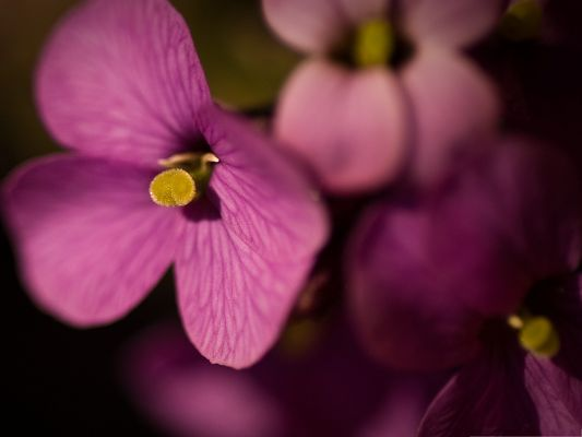 click to free download the wallpaper--Purple Flowers Image, Blooming Flower Under Macro Focus, Amazing Look