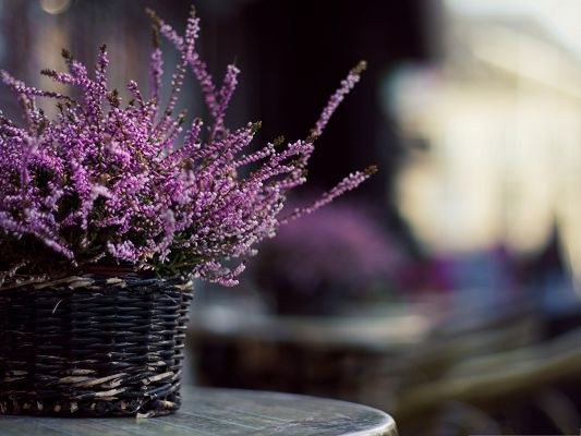 Purple Flowers Image, Purple Little Flowers in Basket, Great Indoor Scene