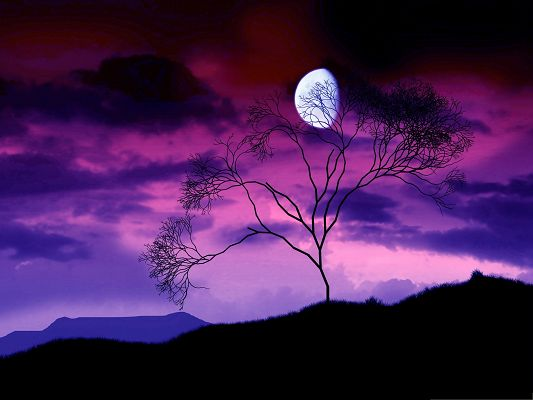 click to free download the wallpaper--Purple Sky Landscape, Full Moon Generating Soft Light, a Tall Tree Beneath
