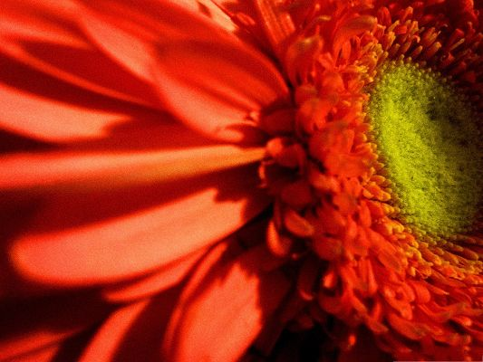 click to free download the wallpaper--Red Flowers Image, Big Flower Blooming, Green Stamen, Nice in Look
