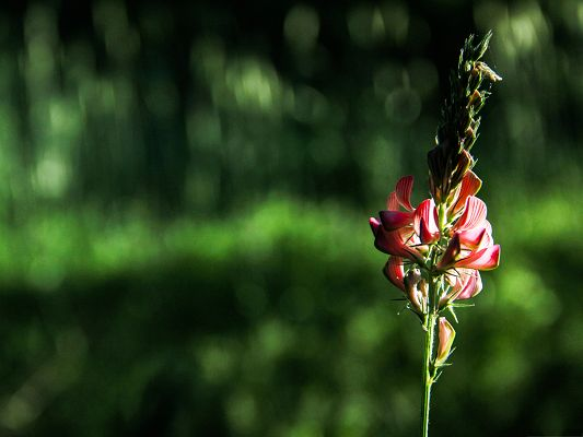 Red Flowers Image, Blooming Flower on Green Background, Amazing Scene