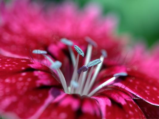 click to free download the wallpaper--Red Flowers Photography, Red Flower and Gray Stem, Macro Focus