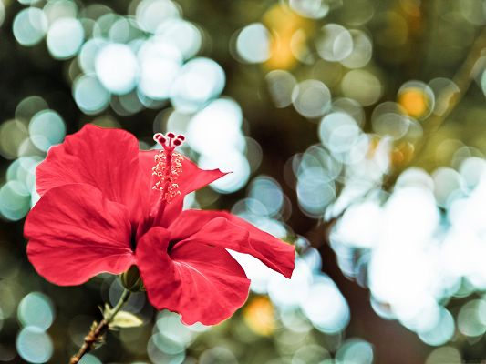 click to free download the wallpaper--Red Flowers Picture, Little Blooming Flower, Bubble and Fozzy Background