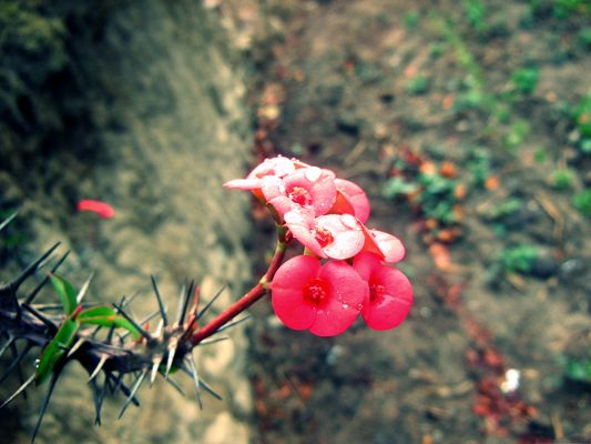 click to free download the wallpaper--Red Flowers Picture, Small Blooming Flower on Cliff, Tough and Powerful