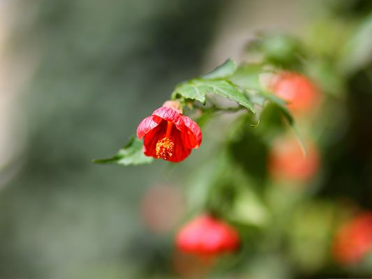 Red Small Flowers Picture, Red Flower and Green Leaves, Amazing Scenery