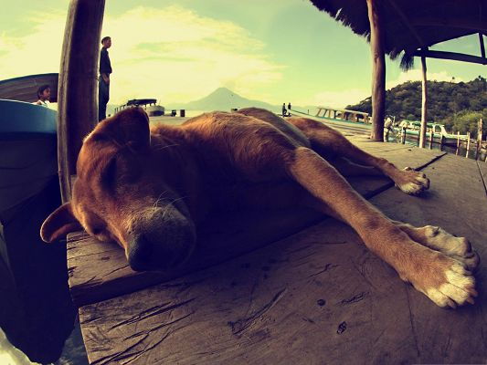 click to free download the wallpaper--Rhodesian Ridgeback Pics, Puppy Sleeping On Pontoon, So Tired