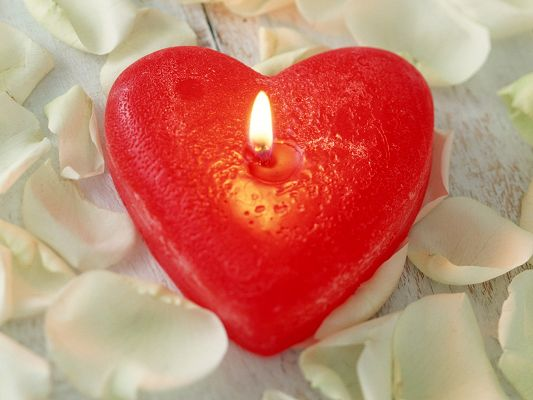 click to free download the wallpaper--Romantic Wallpaper, a Red Candle in Heart Shape, White Petals on the Surface