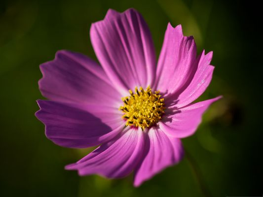 click to free download the wallpaper--Royal Flowers Image, Purple Flower in Bloom, Decent and Nice in Look