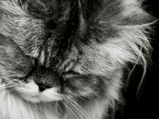 click to free download the wallpaper--Sad Cat Picture, Kitten's Face Rubbed, Too Sad to Rise Its Face