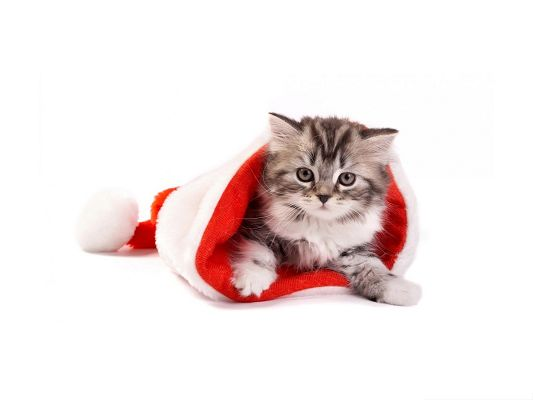 click to free download the wallpaper--Santa Cat Photography, Kitty in Red Christmas Dress, Spread Holiday Atmosphere