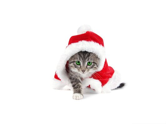 click to free download the wallpaper--Santa Cat Photos, Little Kitty in Christmas Dress, Green Eyes