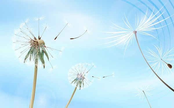 click to free download the wallpaper---Seeds of the Dandelions Free in Flying, with Blue Sky, One's Dream Can be Easy to Realize - Flying Dandelions Wallpaper
