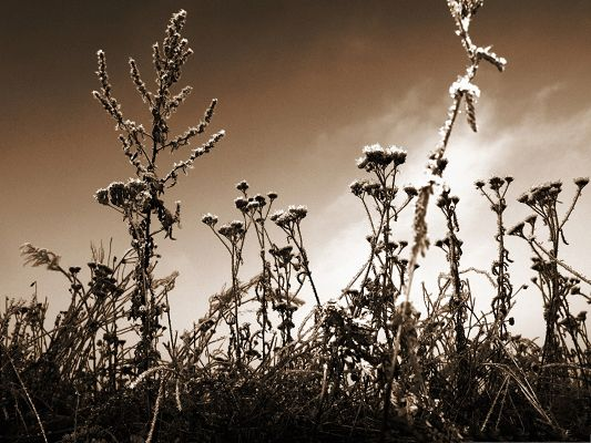 click to free download the wallpaper--Sepia Wild Flowers, Beautiful Flower Under the Dark Sky, Incredible Scene