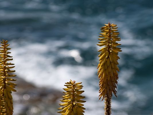 click to free download the wallpaper--Shore Flower Images, Yellow and Long Flowers, Under the Blue Sky