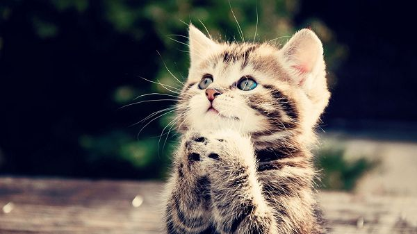 Showing What a Sincere Prayer is Like, God Will Surely Listen to Her and Help Her out - Cute Kitty Wallpaper