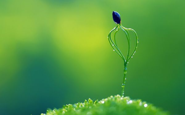 Showing a New and Fresh Life, Has Survived the Rain, Reminding One the Power of Life - Natural Plants Wallpaper