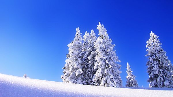 click to free download the wallpaper---Showing a Snow World, Everything is Thick Snow Covered, Background is Blue, What a Clear and Pure World - HD Natural Scenery Wallpaper