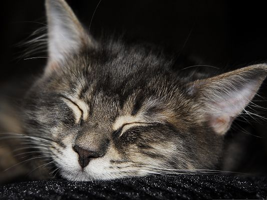 click to free download the wallpaper--Sleeping Cat Photo, Kitten in Sleep, Leave It Alone