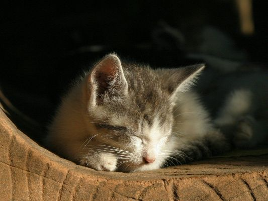 Sleeping Cat Post, Kitten in Sound Sleep, Tomorrow Will Stay in Another Place