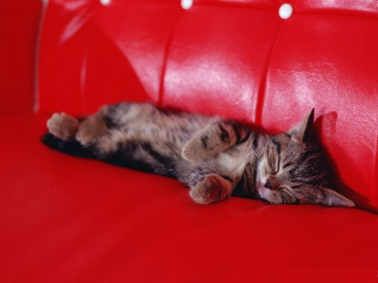 click to free download the wallpaper--Sleeping Kittens Pic, Lying on Red Sofa, Having Sound Sleep