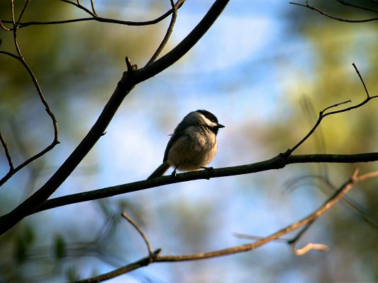 Small Bird Images, Lonely Bird Standing on Tree Branch, Missing Family Members
