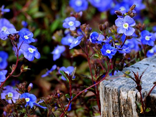 Small Blue Flowers, Blooming Beautiful Flowers, Nice in Look