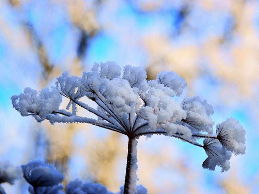 click to free download the wallpaper--Snow Flowers Photo, Snow-Covered Flowers, Be More Prosperous in Spring